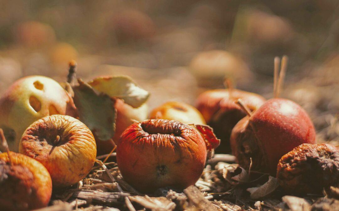 DAKOFA retter fokus mod madaffald og arbejdet i ViV